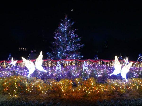 2019 馬見クリスマスウィーク in 奈良県営馬見丘陵公園