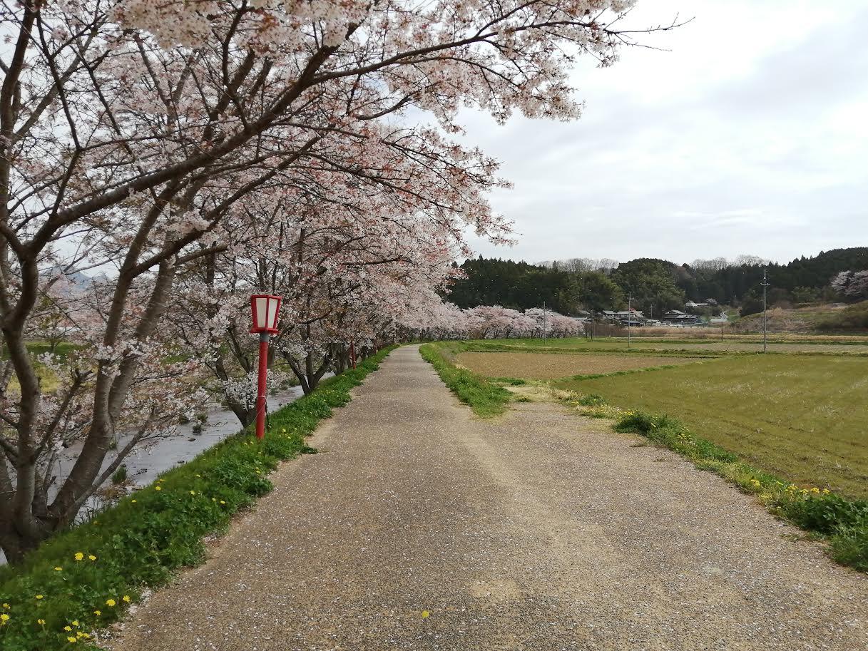 宇陀川桜並木